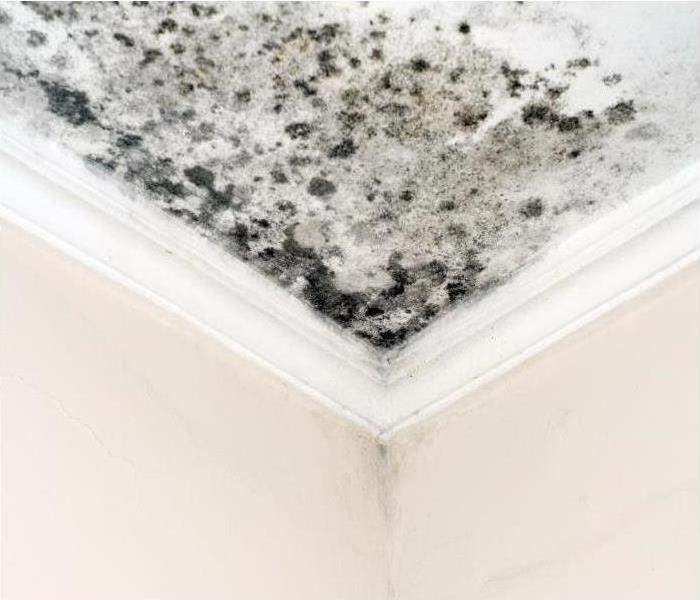 mold growing on the ceiling